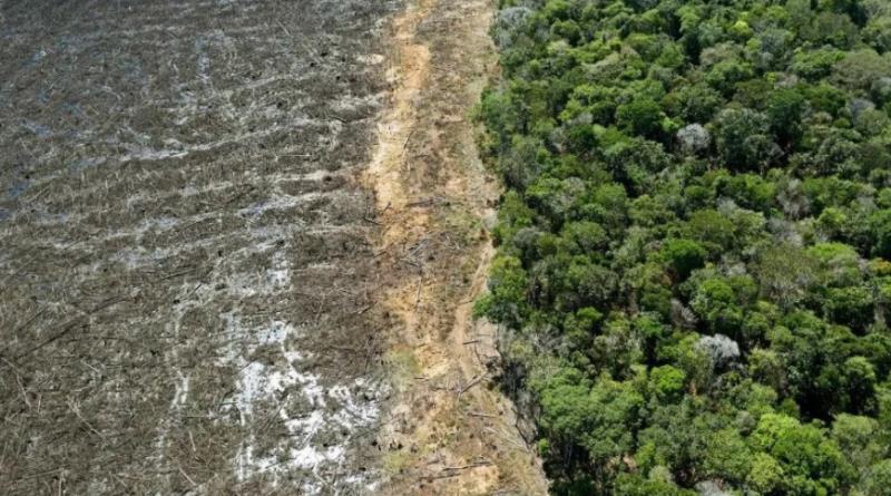 La Amazonia alcanzó su peor nivel de deforestación en diez años